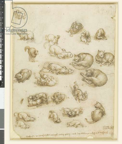 Cats, lions, and a dragon, c.1517-18 (black chalk, pen & ink and wash on paper)