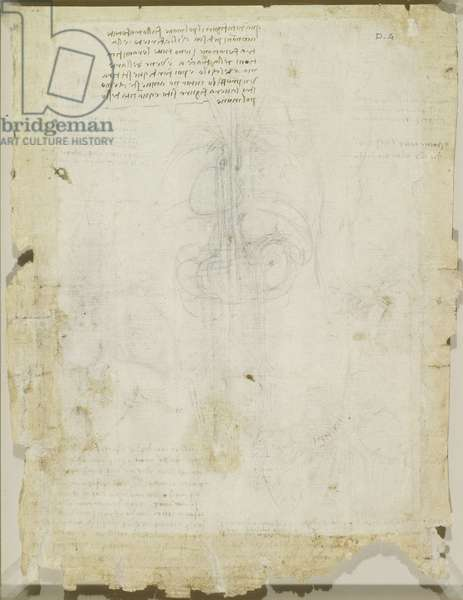 Studies of the heart, lungs, liver, spleen, etc., c.1508 (chalk and pen & ink on paper) (recto of 5648233)