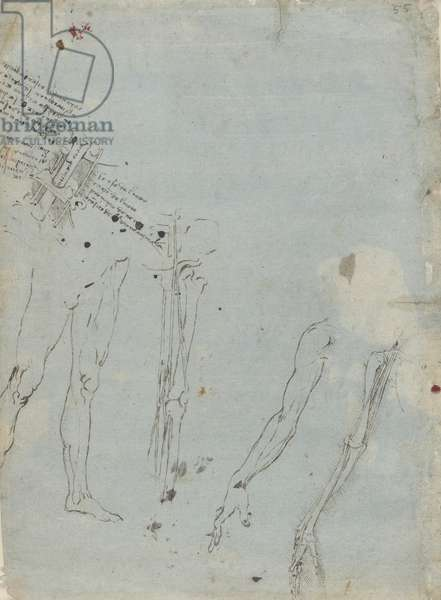 Verso: Studies of the nervous system, c.1485-90 (metalpoint (faded) and pen and ink on blue-grey prepared paper)