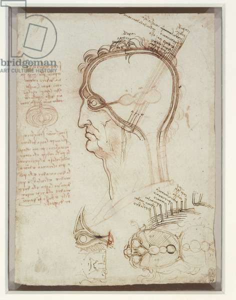 The layers of the scalp compared to an onion and other studies, c.1490-93 (pen & ink and chalk on paper)