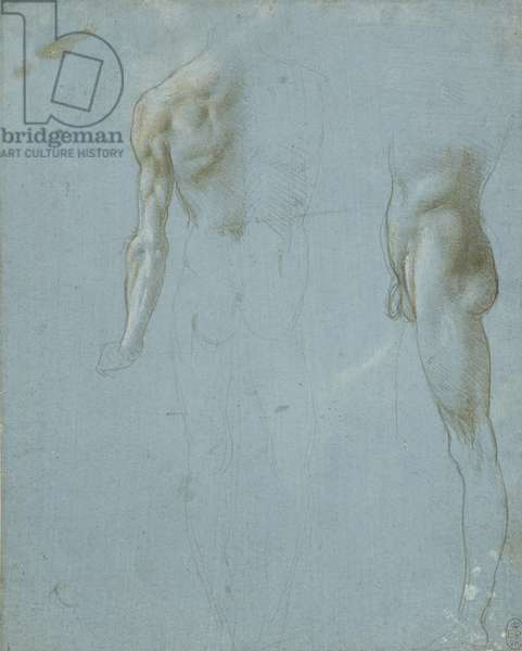 Two studies of a standing male nude, c.1490 (metalpoint, white heightening, on blue-grey prepared paper)