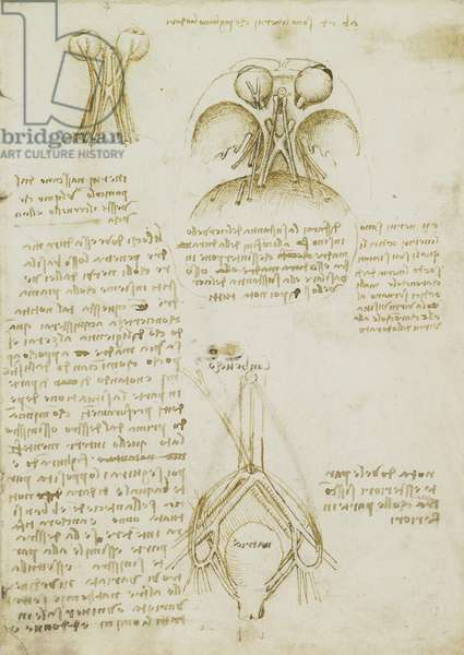 The cranial nerves, c.1508 (pen and ink over traces of black chalk, with scratching out)