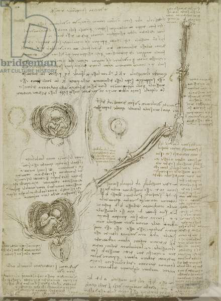 The rotation of the arm, and the foetus in the womb, c.1511 (pen & ink on paper)