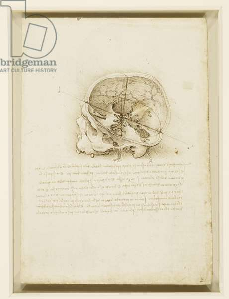 A cranium sectioned, 1489 (pen & ink over black chalk on paper)