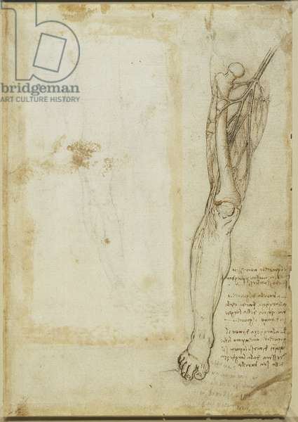 The bone and vessels of the thigh, c.1508-10 (pen & ink and chalk on paper) (verso of 5455481)