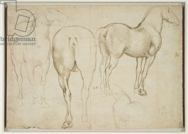 Studies of a horse, c.1490 (metalpoint on pale buff prepared paper)