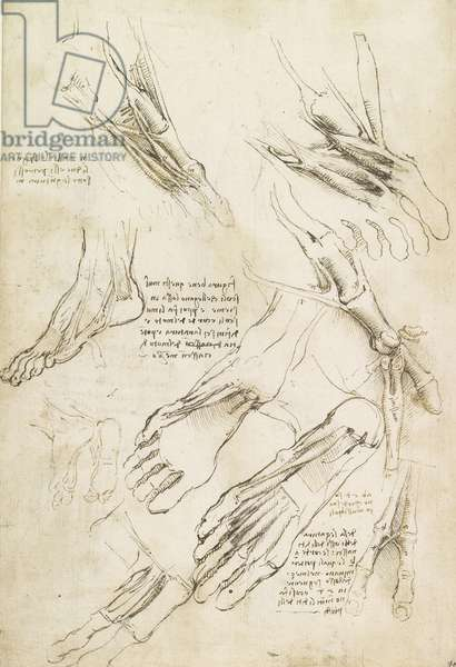 Verso: The muscles of the foot, c.1510-11 (pen & ink over some stylus on paper)