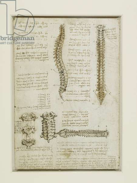 The vertebral column, c.1510 (pen & ink with wash, over traces of black chalk on paper)