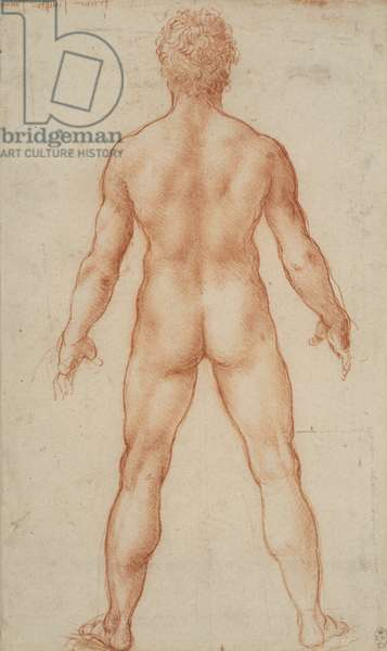 A male nude, c.1504-05 (red chalk on paper)