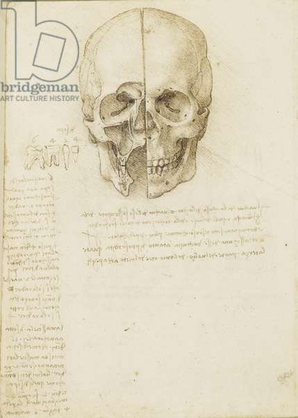 The skull sectioned, 1489 (pen & ink over black chalk on paper)