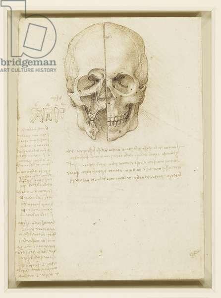 A skull sectioned, 1489 (pen & ink over black chalk on paper)