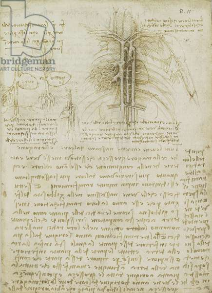 The heart compared to a seed, c.1508 (pen & ink and chalk on paper) (recto of 5455484)
