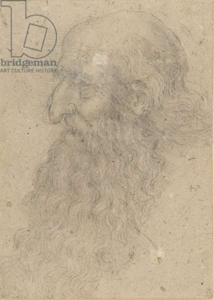 The head of an old bearded man in profile, c.1519 (chalk on paper)