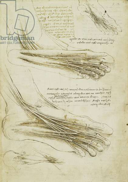 Recto: The muscles and tendons of the sole of the foot, c.1510-11 (pen & ink over some stylus)