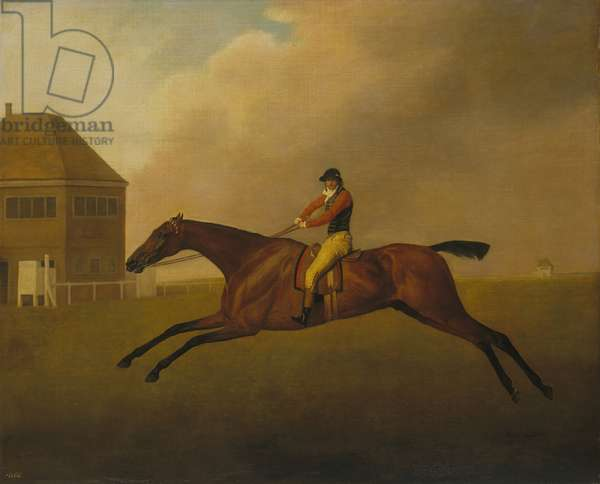 Baronet with Samuel Chifney Up, 1791 (oil on canvas)