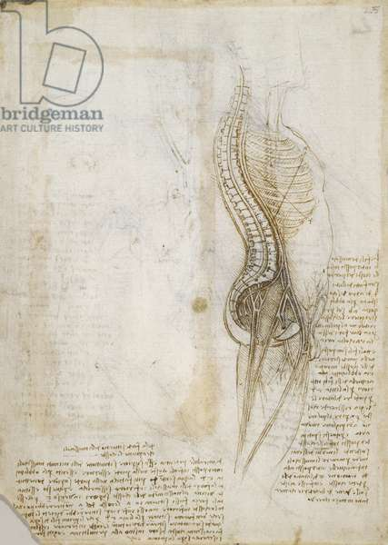 Recto: Diagram of the spine, nerves, vessels, etc., and notes on the intercostal muscles, c.1508-10 (pen & ink on paper)