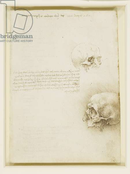 Studies of a cranium, 1489 (pen & ink on paper)
