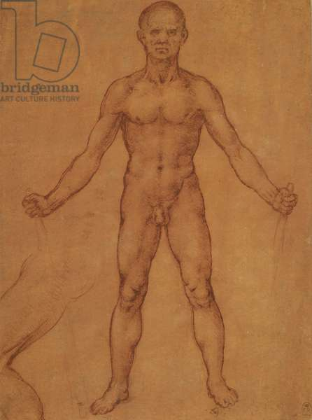 A male nude, and a partial study of the left leg, c.1504-6 (red chalk (partly wetted) on red prepared paper)