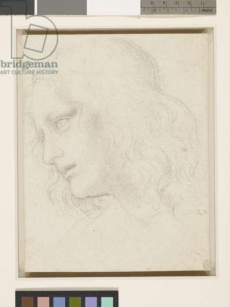 Head of St Philip, c.1495 (black chalk on paper)