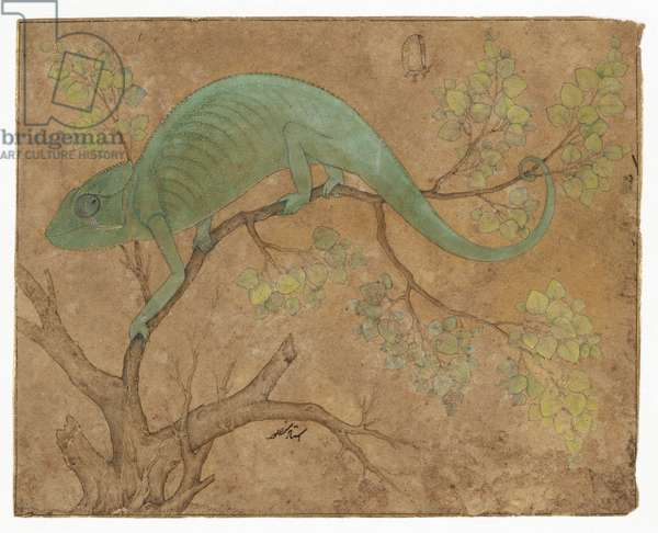 A chameleon, c.1612 (ink & gouache on paper)