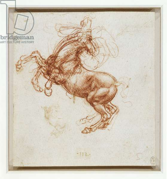 A rearing horse, c.1503-04 (pen & ink and chalk on paper)
