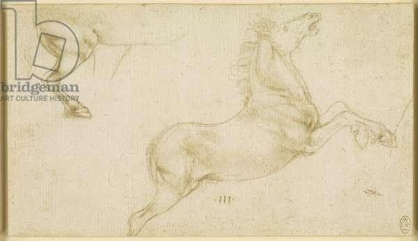 Studies of horses, c.1480 (metalpoint on cream prepared paper)