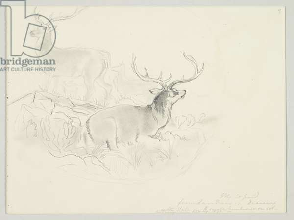 Two stags are shown amongst a herd of deer in a Highland landscape, 17th September 1847 (pencil on paper)