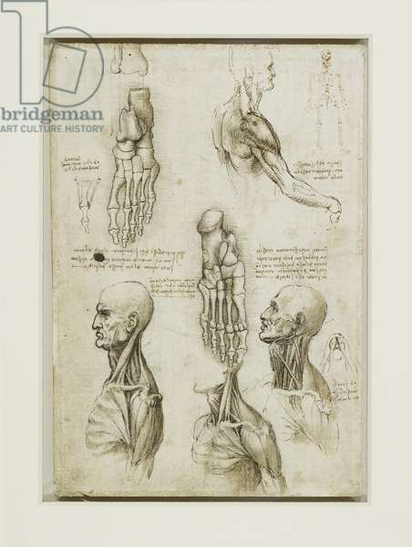 The bones of the foot, and the muscles of the neck, c.1510 (pen & ink with wash over black chalk on paper) (verso of 5321249)