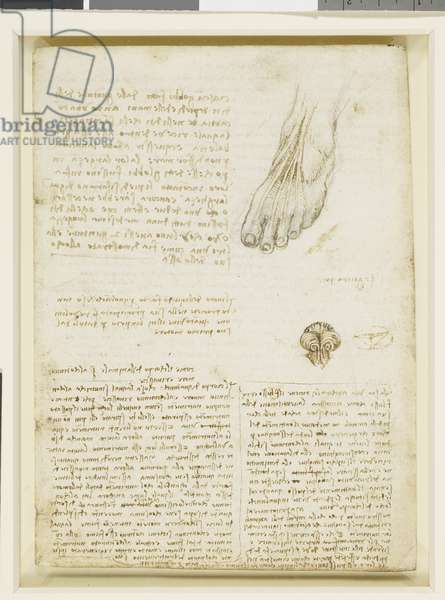 Recto: A study of the tendons of the foot, etc., c.1508 (pen & ink over traces of black chalk on paper)