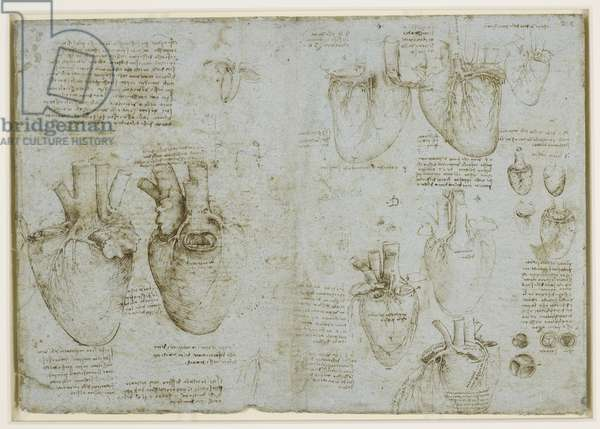 Studies of the coronary vessels and valves of the heart, c.1511-13 (pen & ink on blue paper)