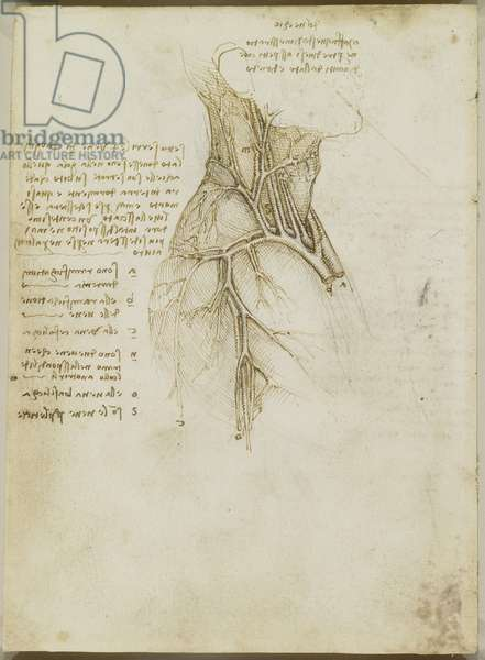 Verso: The vessels of the neck and shoulder, c.1508 (pen and ink over black chalk on paper)