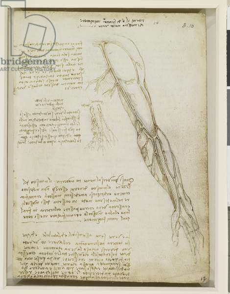 The veins of the arm, c.1508 (pen and ink over traces of black chalk)
