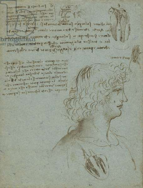 Studies of the heart, and the head of a youth in profile c.1511-13 (pen & ink on blue paper)