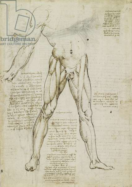 Recto: The muscles of the leg, c.1510-11 (black chalk, pen & ink, wash on paper)