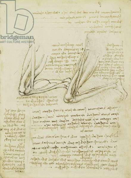 Recto: The muscles of the leg, 1489 (pen & ink over black chalk on paper)