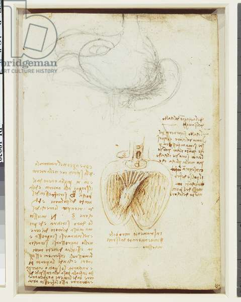 Recto: The stomach, and the heart, c.1508 (pen & ink on paper) (recto of 5934187)