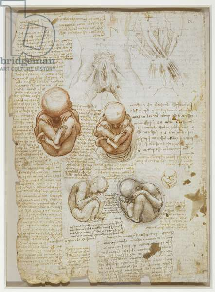 Studies of the foetus in the womb, and the external genitalia, c.1510-13 (pen & ink with wash over black and red chalk on paper)