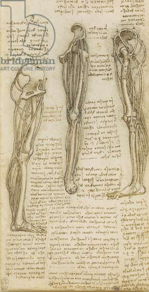 Recto: The bones and schematised muscles of the leg, c.1510 (pen & ink over traces of black chalk on paper)