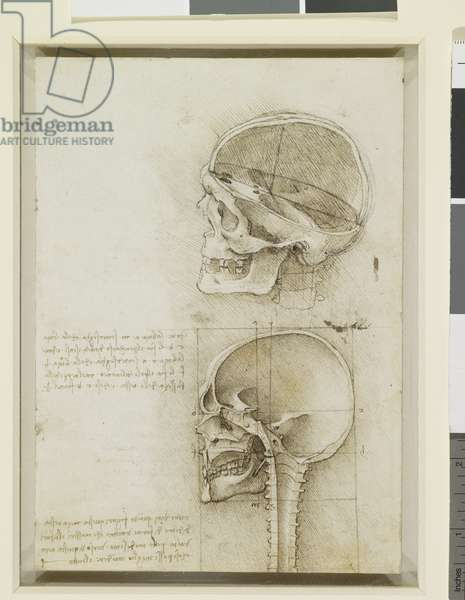 A skull sectioned, 1489 (pen & ink over black chalk on paper) (recto of 3740758)