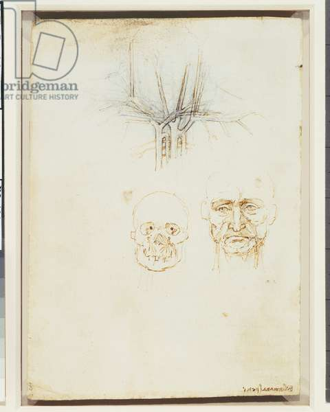 Verso: The vessels of the neck and face, c.1508 (pen & ink on paper) (verso of 5934186)