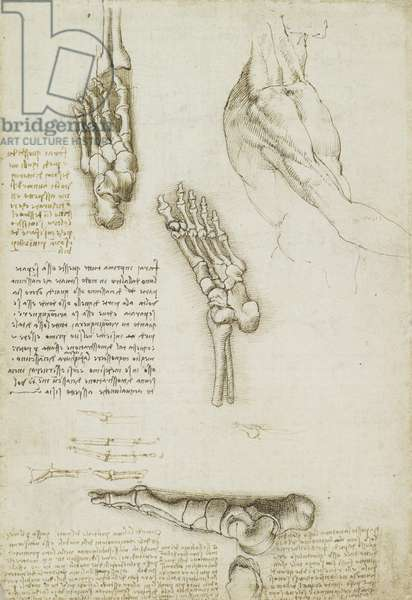 Recto: The bones of the foot, c.1510-11 (black chalk, pen and ink, wash on paper)