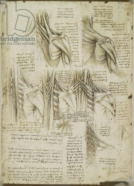 Recto: The muscles of the upper spine, c.1510-11 (black chalk, pen and ink, wash on paper)