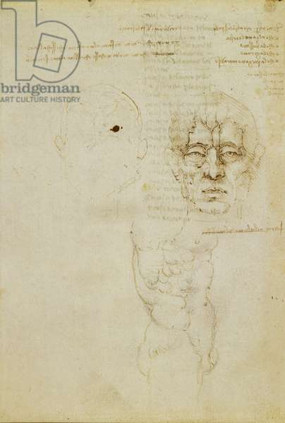 Recto: The veins of the face, and a torso, 1489 (pen & ink on paper)