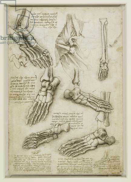 Recto: The bones of the foot, and the shoulder, c.1510-11 (pen & ink with wash, over traces of black chalk on paper)