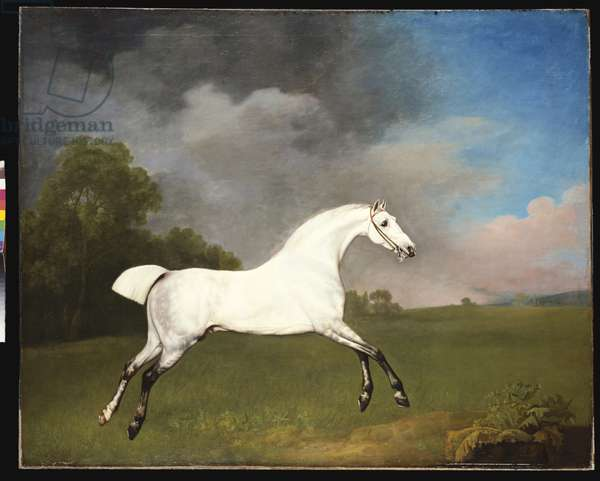 A Grey Horse, 1793 (oil on canvas)