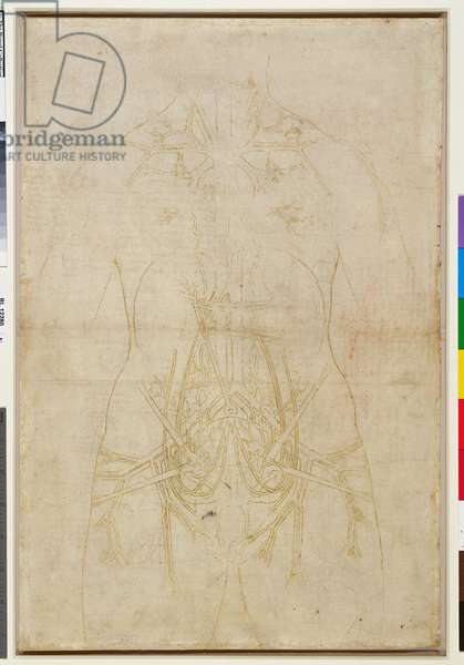 Verso: The principal organs and vessels of a woman (tracing), c.1508-10 (pen & ink on paper) (verso of 6166217)