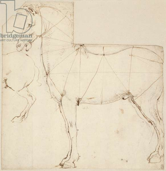 Horse in profile divided by lines, c.1480 (pen & ink and chalk on paper)