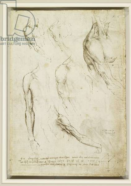 Recto: The muscles of the shoulder and arm, c.1510-11 (pen & ink on paper) (recto of 3899940)