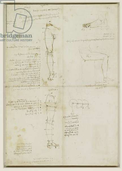 Verso: The proportions of the leg and foot, c.1490 (pen & ink on paper) (verso of 3823038)
