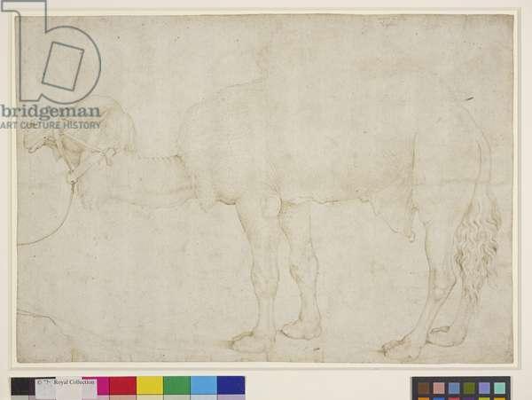 A dromedary, c.1500-50 (pen & ink on paper)